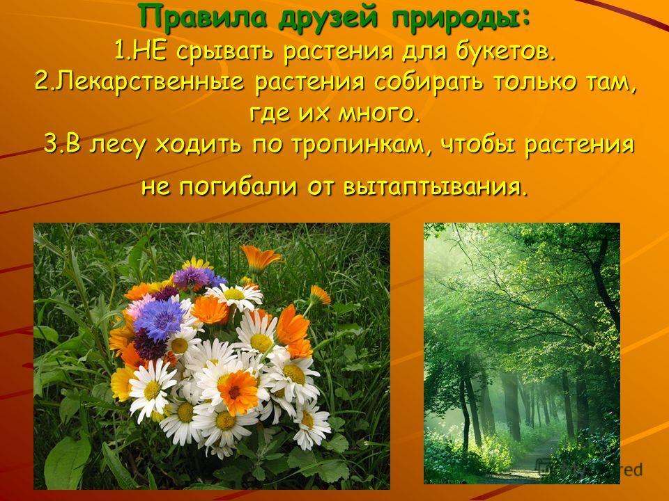 Правила друзей природы: 1.НЕ срывать растения для букетов. 2.Лекарственные растения собирать только там, где их много. 3.В лесу ходить по тропинкам, чтобы растения не погибали от вытаптывания.