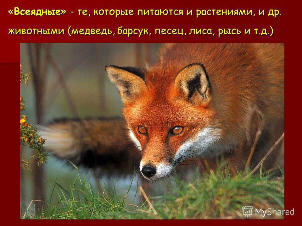 «Всеядные» - те, которые питаются и растениями, и др. животными (медведь, барсук, песец, лиса, рысь и т.д.)