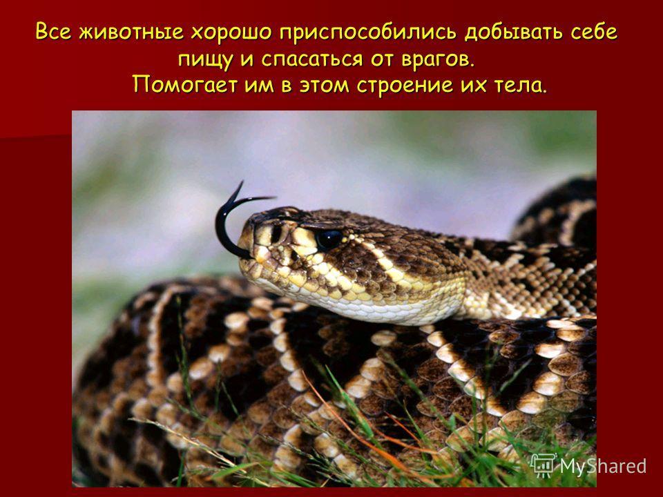 Все животные хорошо приспособились добывать себе пищу и спасаться от врагов. Помогает им в этом строение их тела.