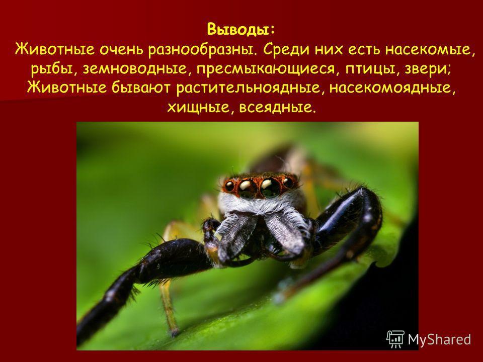 Выводы: Животные очень разнообразны. Среди них есть насекомые, рыбы, земноводные, пресмыкающиеся, птицы, звери; Животные бывают растительноядные, насекомоядные, хищные, всеядные.