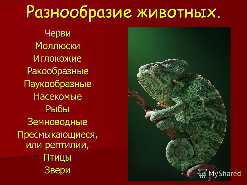 Разнообразие животных. ЧервиМоллюскиИглокожиеРакообразныеПаукообразныеНасекомыеРыбыЗемноводные Пресмыкающиеся, или рептилии, ПтицыЗвери