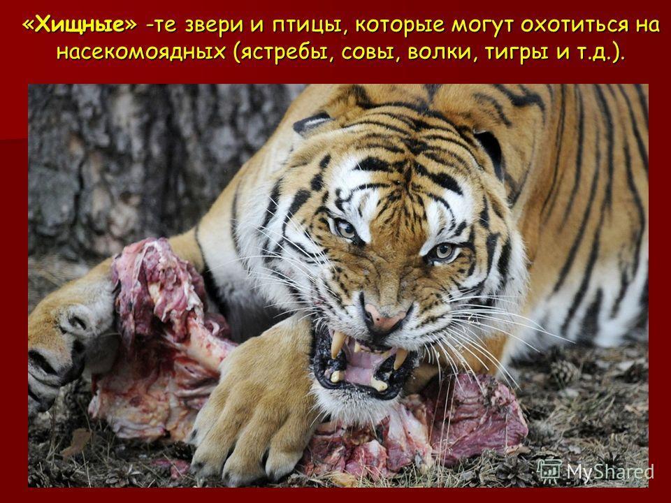 «Хищные» -те звери и птицы, которые могут охотиться на насекомоядных (ястребы, совы, волки, тигры и т.д.).