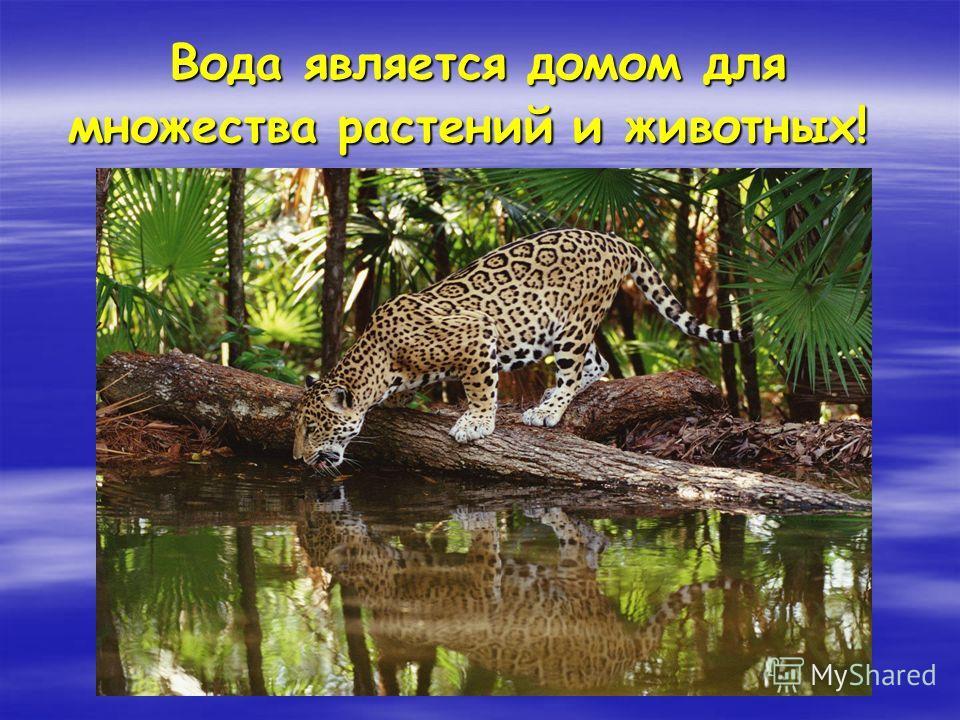 Вода является домом для множества растений и животных! Вода является домом для множества растений и животных!