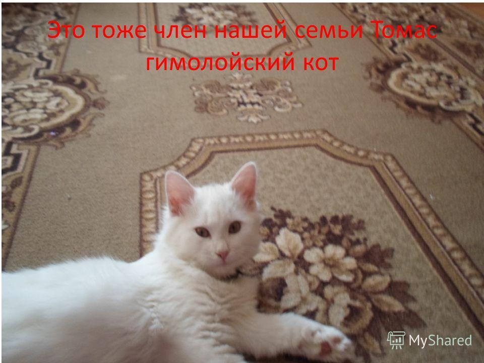 Это тоже член нашей семьи Томас гимолойский кот