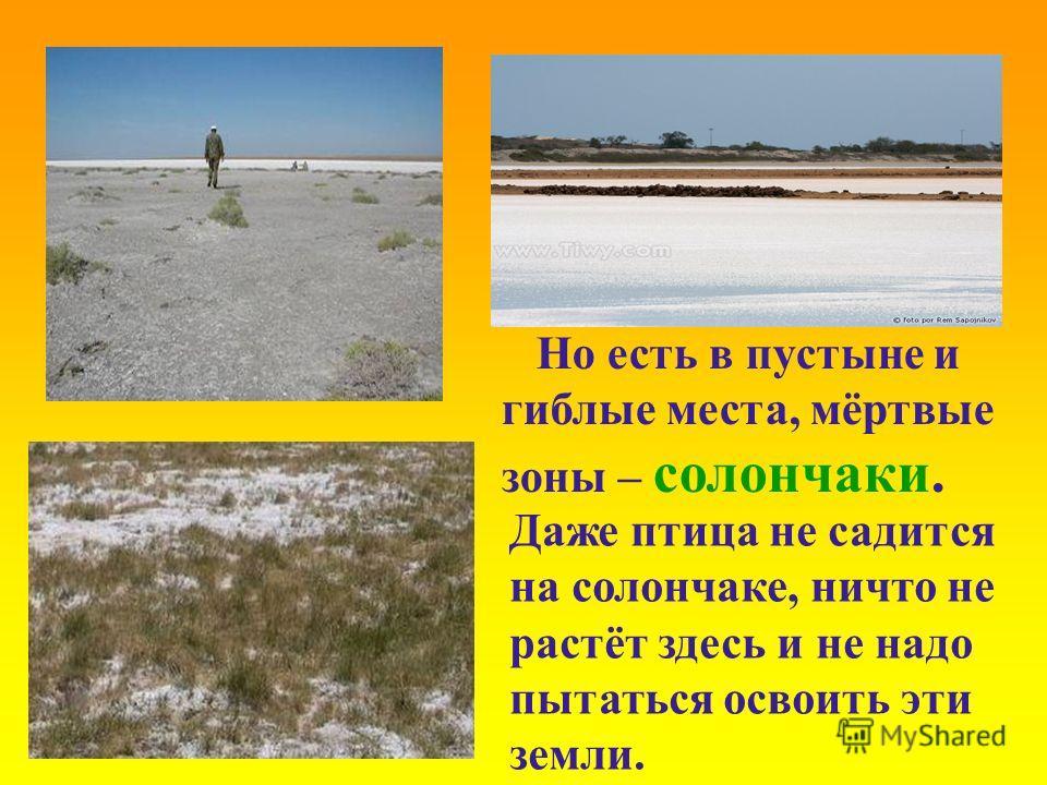 Но есть в пустыне и гиблые места, мёртвые зоны – cолончаки. Даже птица не садится на солончаке, ничто не растёт здесь и не надо пытаться освоить эти земли.