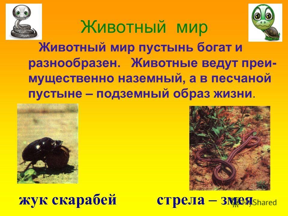 Животный мир Животный мир пустынь богат и разнообразен. Животные ведут преи- мущественно наземный, а в песчаной пустыне – подземный образ жизни. жук скарабей стрела – змея