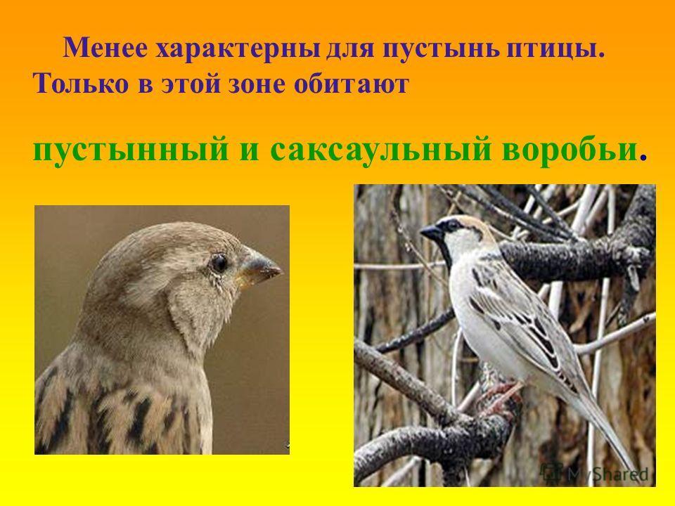 Менее характерны для пустынь птицы. Только в этой зоне обитают пустынный и саксаульный воробьи.