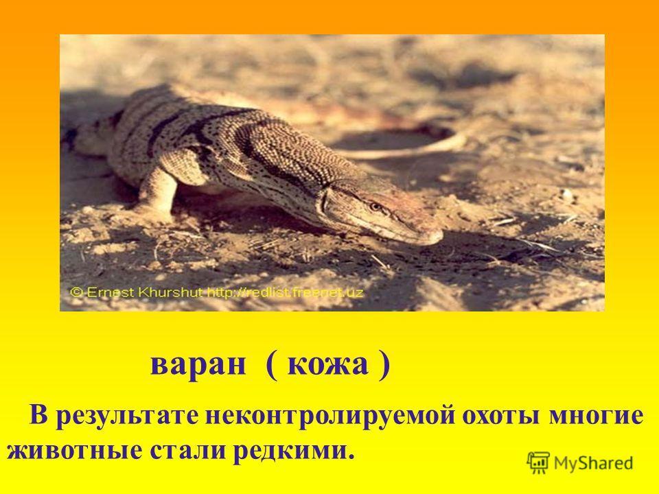 варан ( кожа ) В результате неконтролируемой охоты многие животные стали редкими.