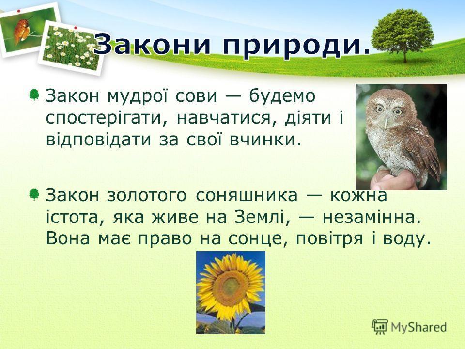 Закон мудрої сови будемо спостерігати, навчатися, діяти і відповідати за свої вчинки. Закон золотого соняшника кожна істота, яка живе на Землі, незамінна. Вона має право на сонце, повітря і воду.