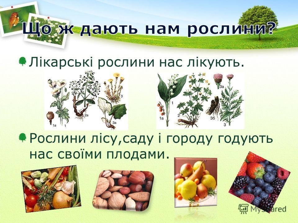 Лікарські рослини нас лікують. Рослини лісу,саду і городу годують нас своїми плодами.
