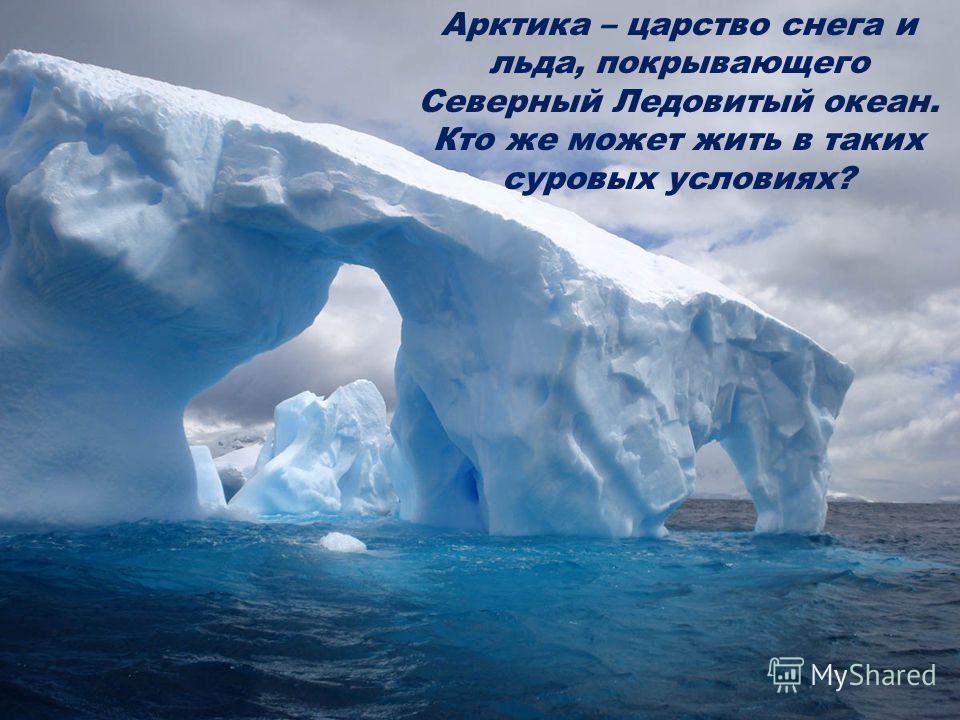 Арктика – царство снега и льда, покрывающего Северный Ледовитый океан. Кто же может жить в таких суровых условиях?