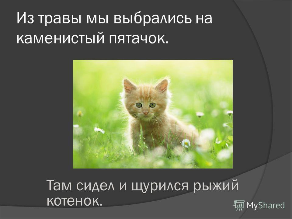 Из травы мы выбрались на каменистый пятачок. Там сидел и щурился рыжий котенок.