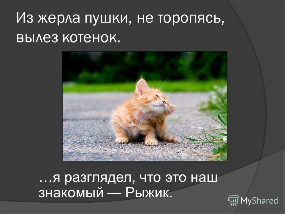 Из жерла пушки, не торопясь, вылез котенок. …я разглядел, что это наш знакомый Рыжик.