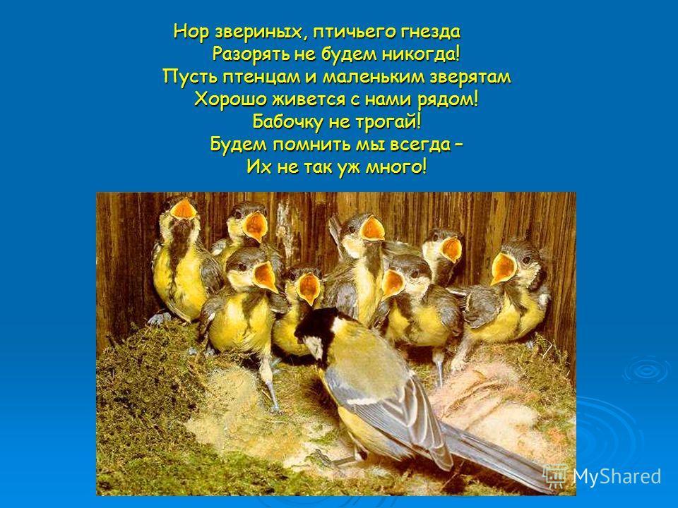 Нор звериных, птичьего гнезда Разорять не будем никогда! Пусть птенцам и маленьким зверятам Хорошо живется с нами рядом! Бабочку не трогай! Будем помнить мы всегда – Их не так уж много!