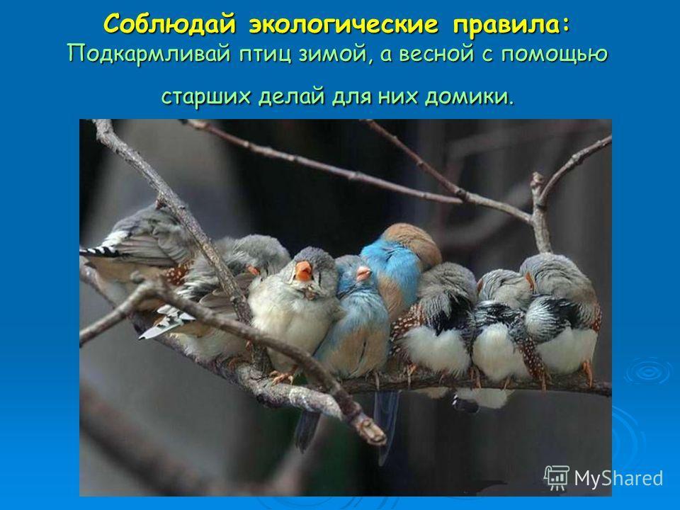 Соблюдай экологические правила: Подкармливай птиц зимой, а весной с помощью старших делай для них домики.