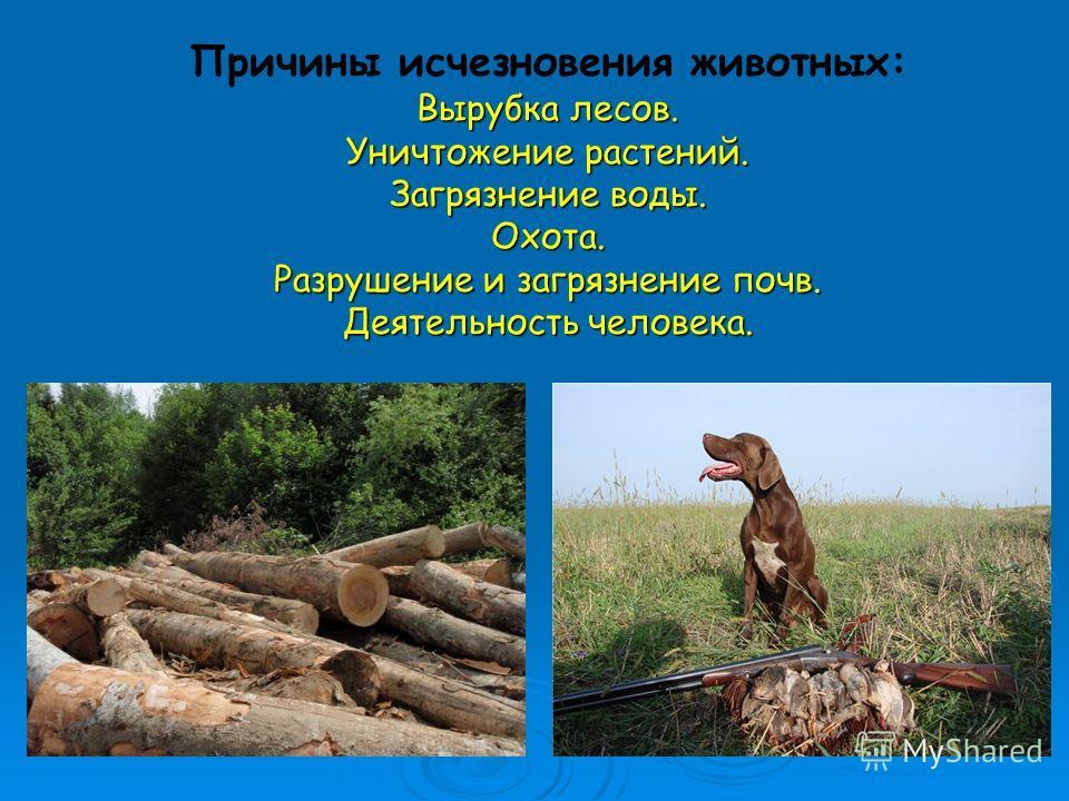 Вырубка лесов. Уничтожение растений. Загрязнение воды. Охота. Разрушение и загрязнение почв. Деятельность человека. Причины исчезновения животных: Вырубка лесов. Уничтожение растений. Загрязнение воды. Охота. Разрушение и загрязнение почв. Деятельнос