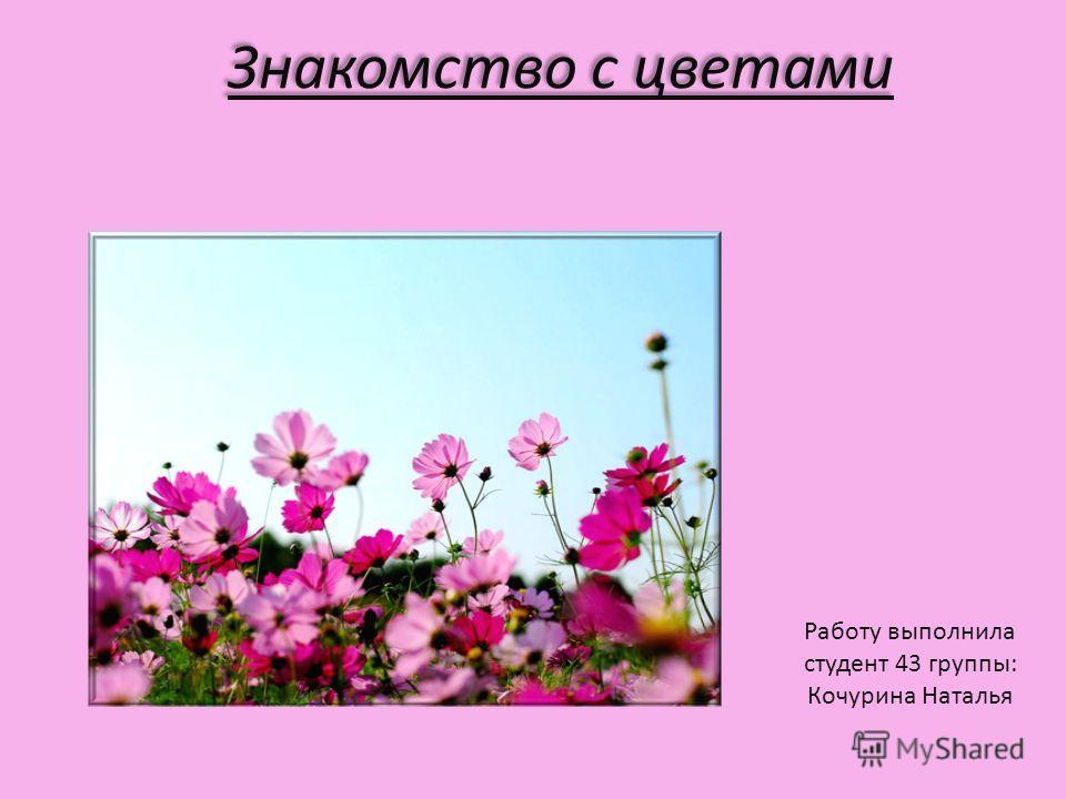 Знакомство с цветами Работу выполнила студент 43 группы: Кочурина Наталья