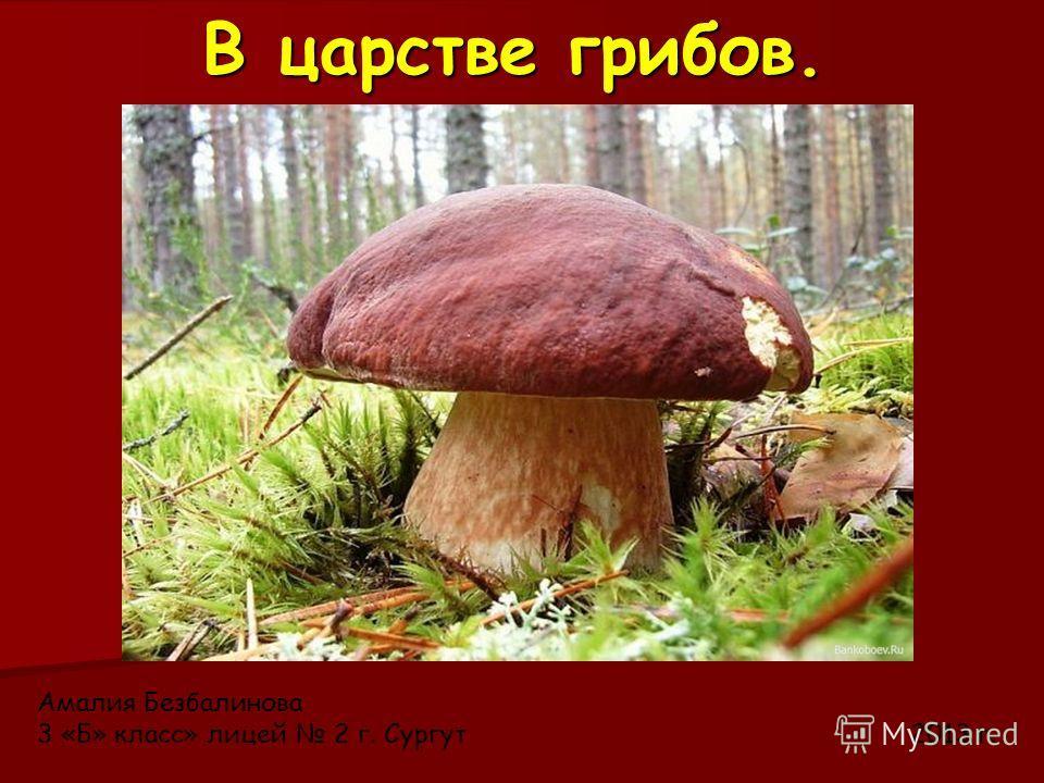 В царстве грибов. Амалия Безбалинова 3 «Б» класс» лицей 2 г. Сургут 2013 г.