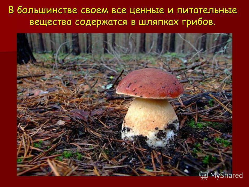 В большинстве своем все ценные и питательные вещества содержатся в шляпках грибов.