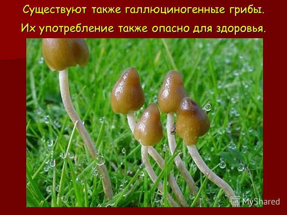 Существуют также галлюциногенные грибы. Их употребление также опасно для здоровья.