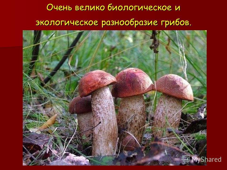 Очень велико биологическое и экологическое разнообразие грибов.
