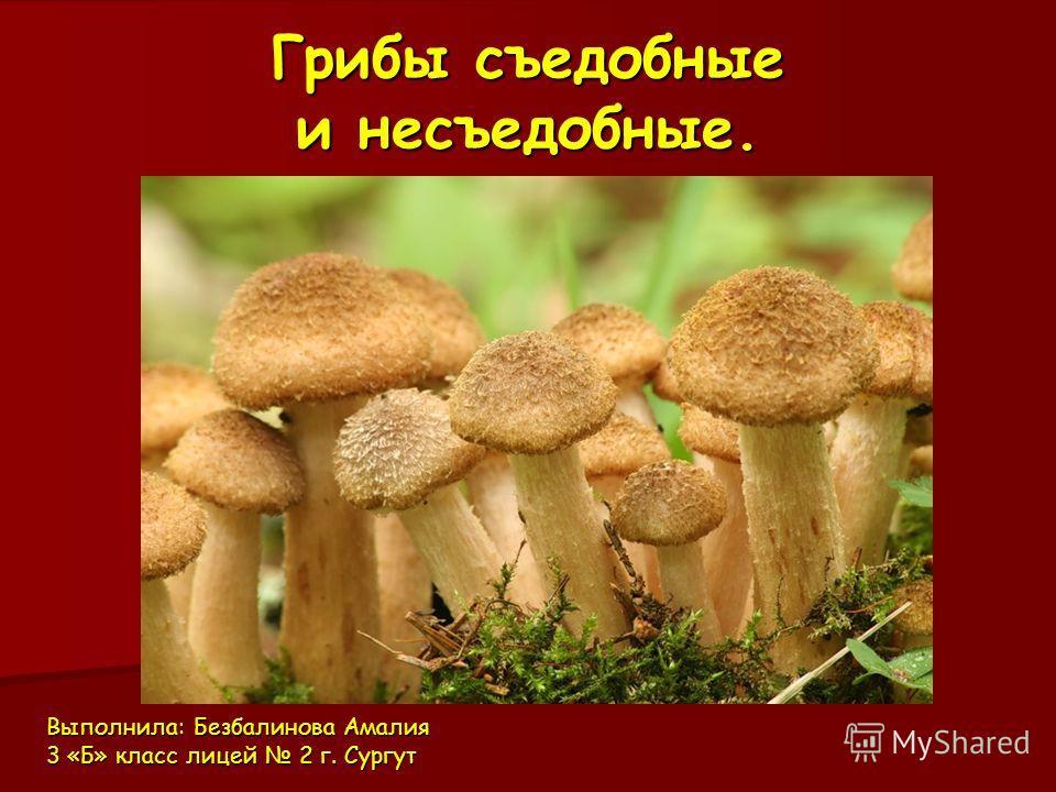 Использование грибов