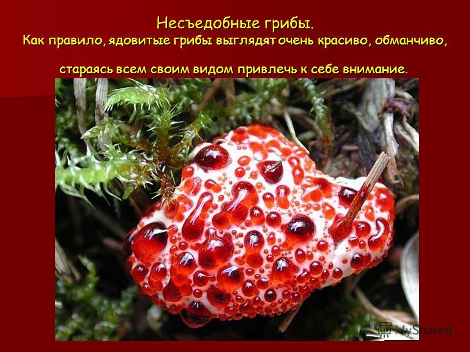 Несъедобные грибы. Как правило, ядовитые грибы выглядят очень красиво, обманчиво, стараясь всем своим видом привлечь к себе внимание. Несъедобные грибы. Как правило, ядовитые грибы выглядят очень красиво, обманчиво, стараясь всем своим видом привлечь