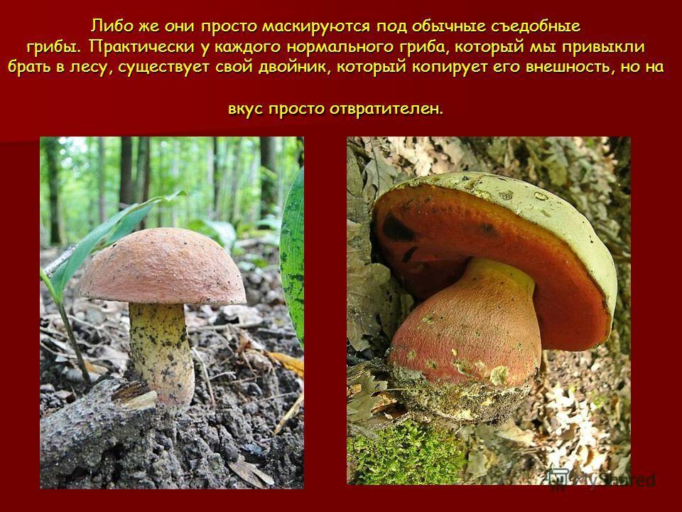 Либо же они просто маскируются под обычные съедобные грибы. Практически у каждого нормального гриба, который мы привыкли брать в лесу, существует свой двойник, который копирует его внешность, но на вкус просто отвратителен.