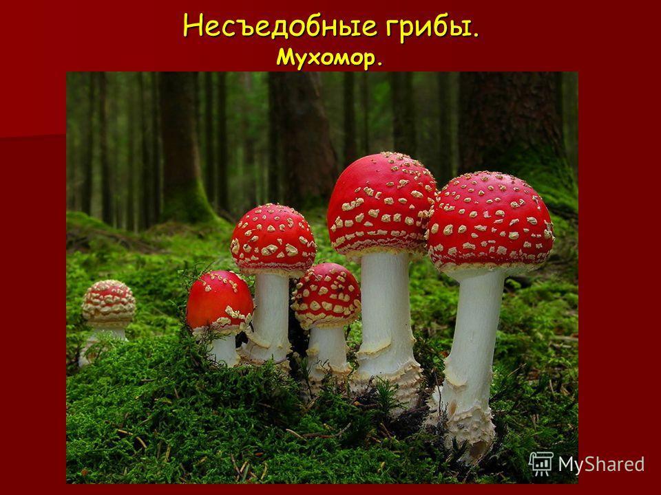 Несъедобные грибы. Мухомор.