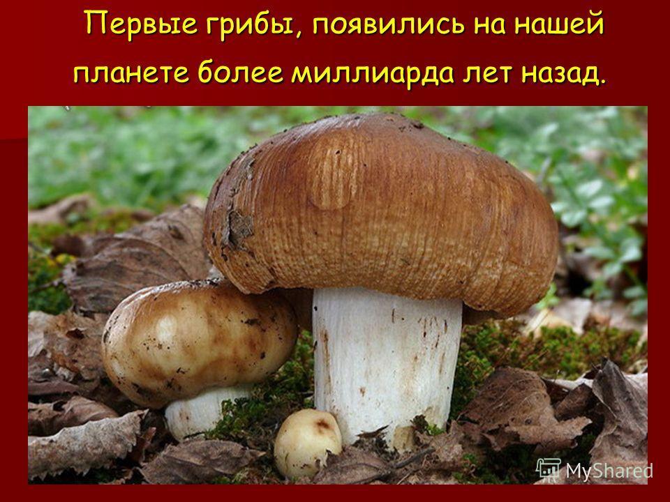 Презентация на тему Грибы съедобные и несъедобные Выполнила  2 Первые грибы появились на нашей планете более миллиарда лет назад Первые грибы появились на нашей планете более миллиарда лет назад