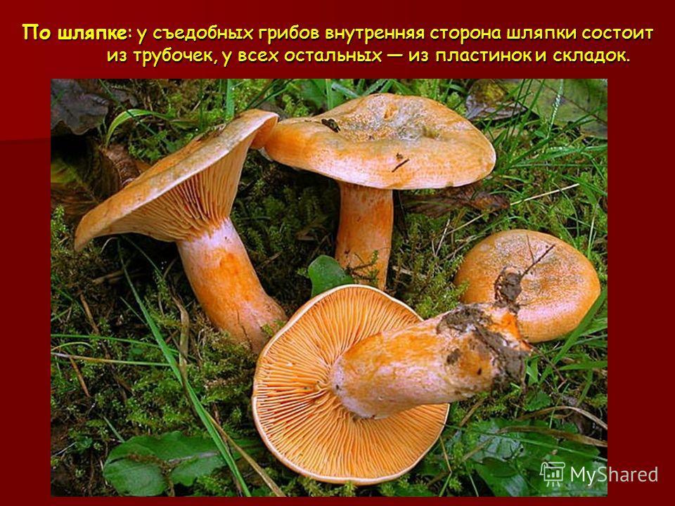 По шляпке: у съедобных грибов внутренняя сторона шляпки состоит из трубочек, у всех остальных из пластинок и складок.