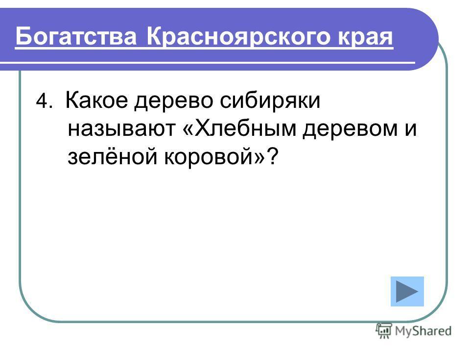 Богатства Красноярского края 4. Какое дерево сибиряки называют «Хлебным деревом и зелёной коровой»?