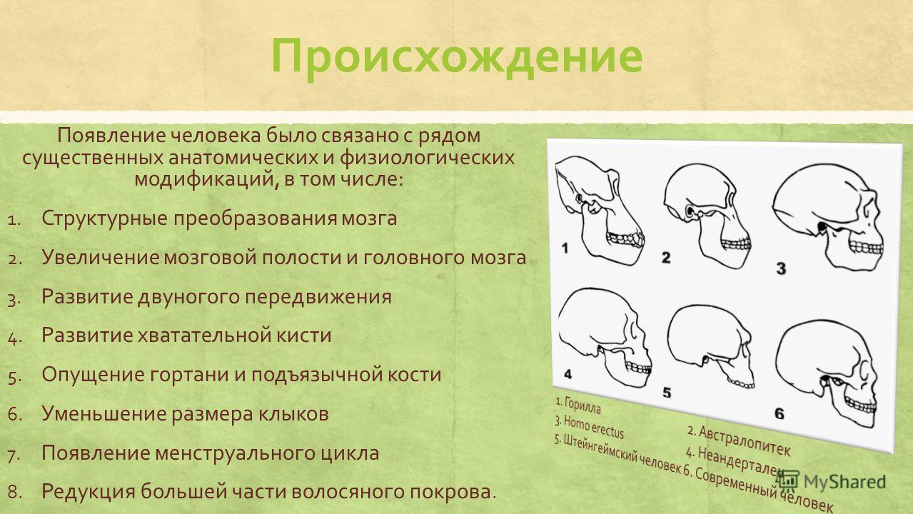 Происхождение Появление человека было связано с рядом существенных анатомических и физиологических модификаций, в том числе: 1. Структурные преобразования мозга 2. Увеличение мозговой полости и головного мозга 3. Развитие двуногого передвижения 4. Ра