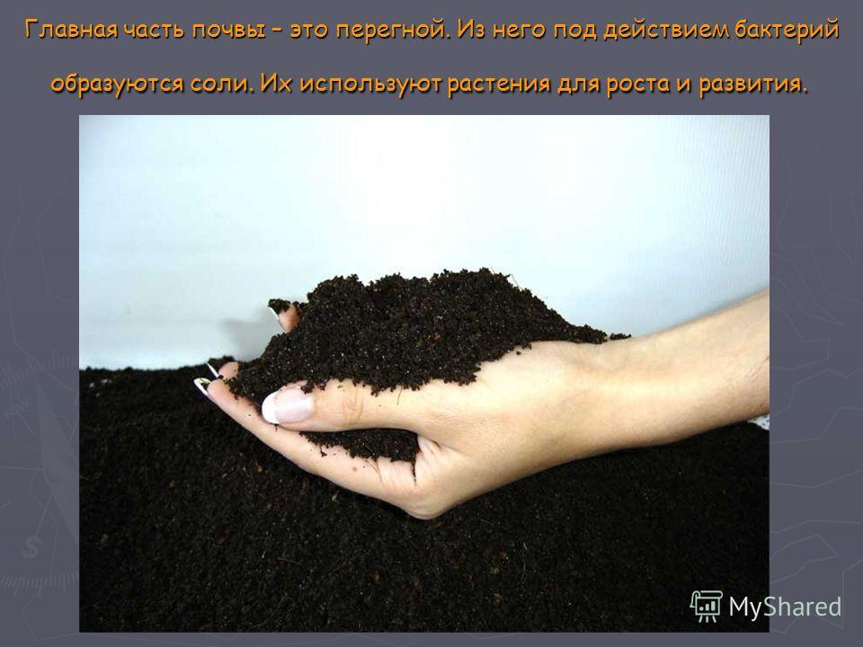 Главная часть почвы – это перегной. Из него под действием бактерий образуются соли. Их используют растения для роста и развития. Главная часть почвы – это перегной. Из него под действием бактерий образуются соли. Их используют растения для роста и ра