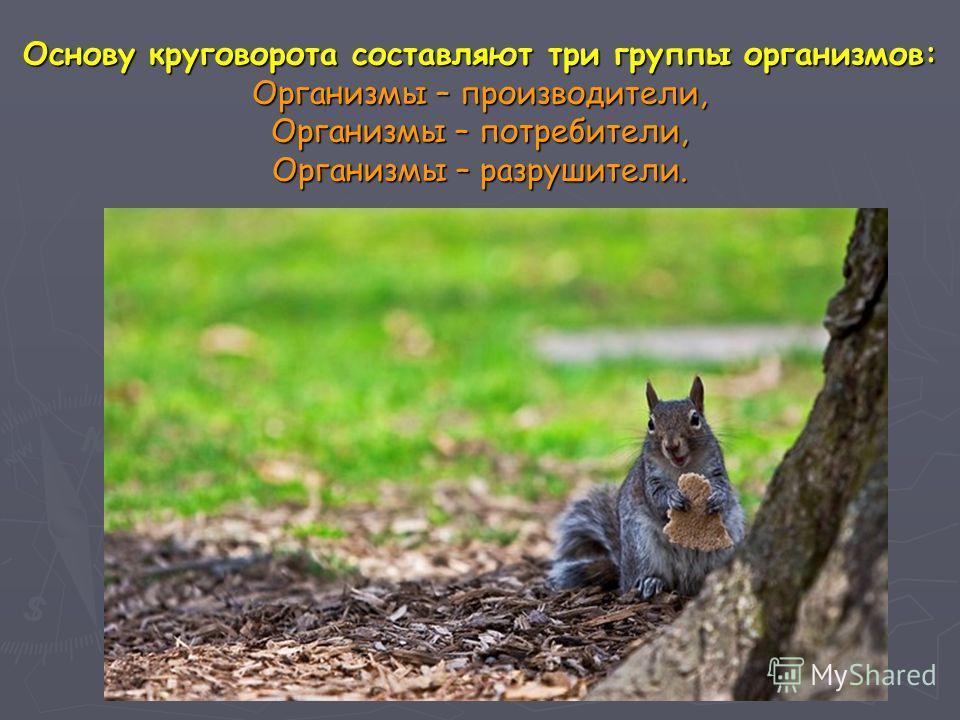 Основу круговорота составляют три группы организмов: Организмы – производители, Организмы – потребители, Организмы – разрушители.