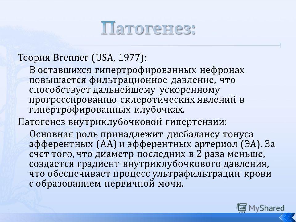 Теория Brenner (USA, 1977): В оставшихся гипертрофированных нефронах повышается фильтрационное давление, что способствует дальнейшему ускоренному прогрессированию склеротических явлений в гипертрофированных клубочках. Патогенез внутриклубочковой гипе