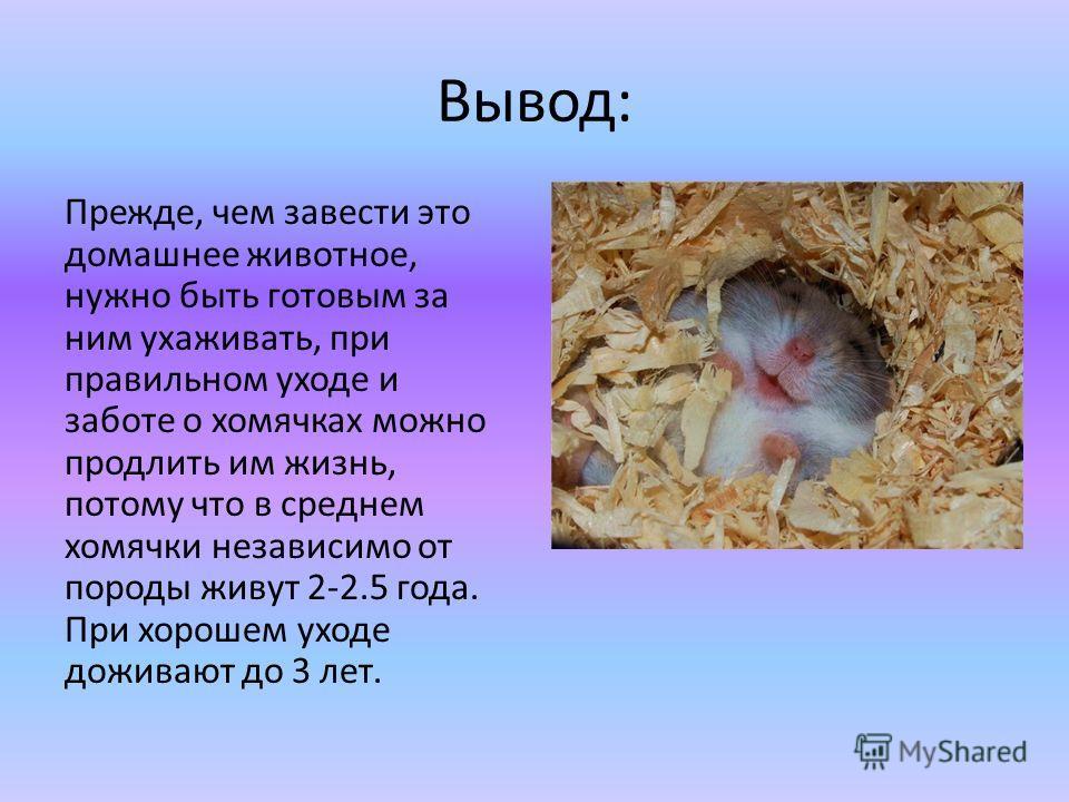 Вывод: Прежде, чем завести это домашнее животное, нужно быть готовым за ним ухаживать, при правильном уходе и заботе о хомячках можно продлить им жизнь, потому что в среднем хомячки независимо от породы живут 2-2.5 года. При хорошем уходе доживают до