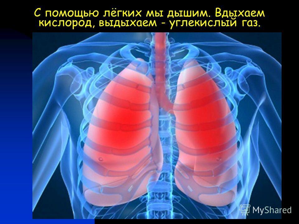 С помощью лёгких мы дышим. Вдыхаем кислород, выдыхаем - углекислый газ.
