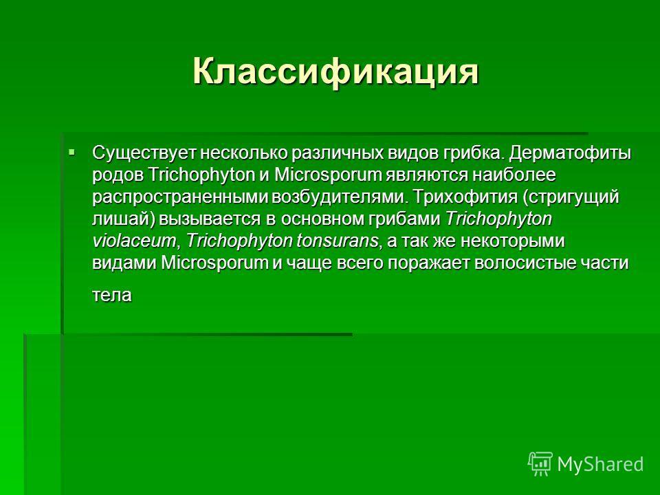 Классификация Существует несколько различных видов грибка. Дерматофиты родов Trichophyton и Microsporum являются наиболее распространенными возбудителями. Трихофития (стригущий лишай) вызывается в основном грибами Trichophyton violaceum, Trichophyton