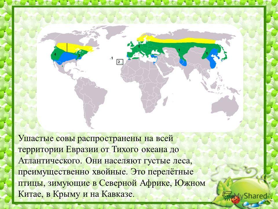 Ушастые совы распространены на всей территории Евразии от Тихого океана до Атлантического. Они населяют густые леса, преимущественно хвойные. Это перелётные птицы, зимующие в Северной Африке, Южном Китае, в Крыму и на Кавказе.