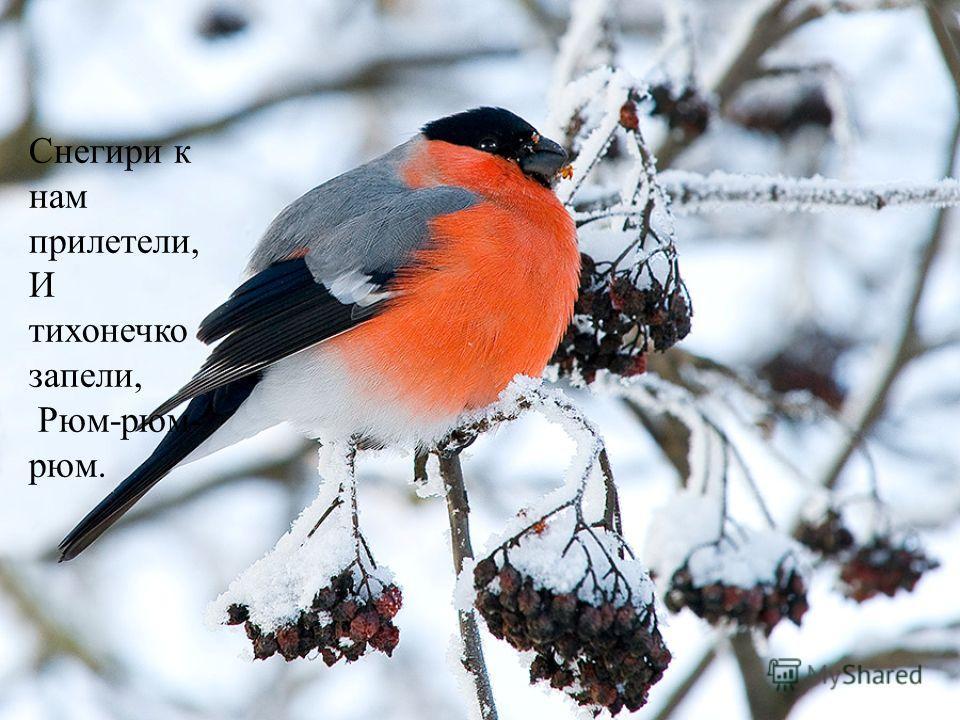 Снегири к нам прилетели, И тихонечко запели, Рюм-рюм- рюм.