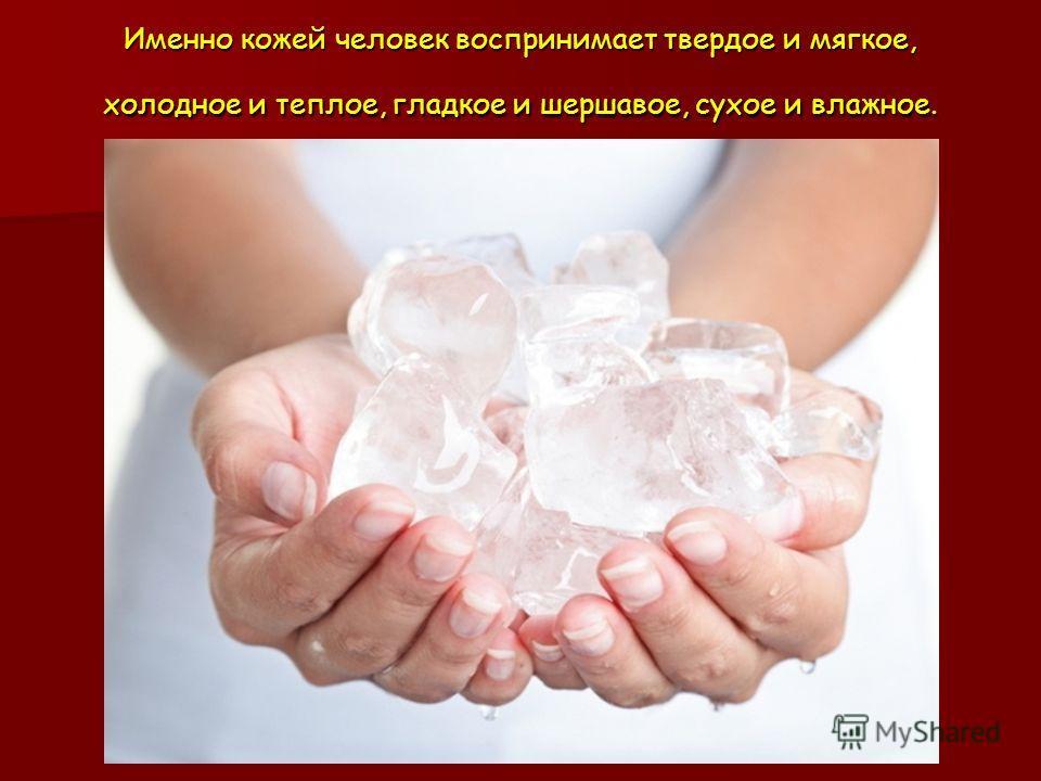 Именно кожей человек воспринимает твердое и мягкое, холодное и теплое, гладкое и шершавое, сухое и влажное.