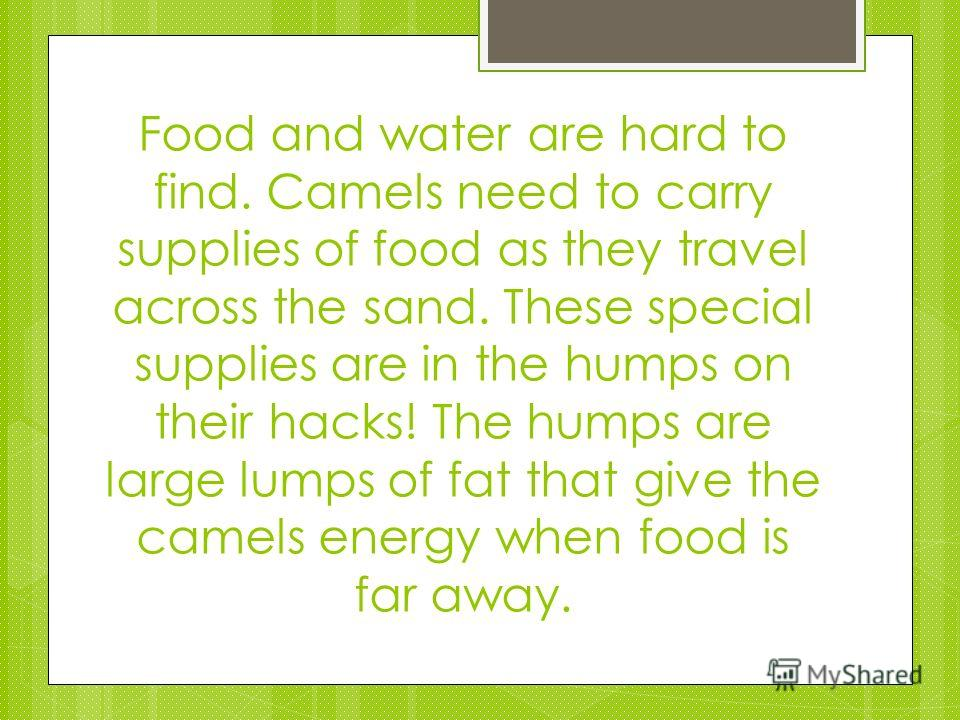 Food and water are hard to find. Camels need to carry supplies of food as they travel across the sand. These special supplies are in the humps on their hacks! The humps are large lumps of fat that give the camels energy when food is far away.