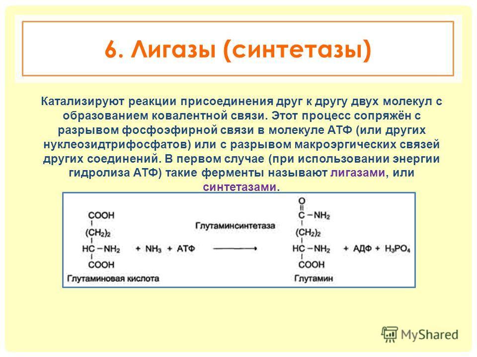 6. Лигазы (синтетазы) Катализируют реакции присоединения друг к другу двух молекул с образованием ковалентной связи. Этот процесс сопряжён с разрывом фосфоэфирной связи в молекуле АТФ (или других нуклеозидтрифосфатов) или с разрывом макроэргических с