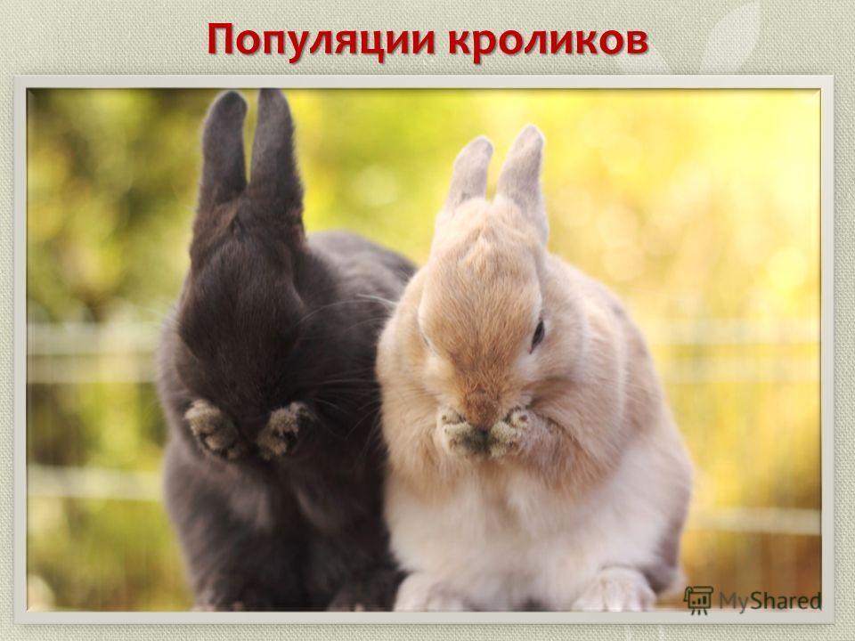 Популяции кроликов