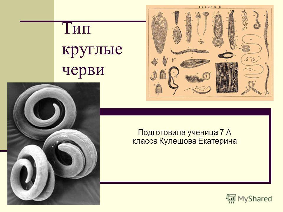 Тип круглые черви Подготовила ученица 7 А класса Кулешова Екатерина
