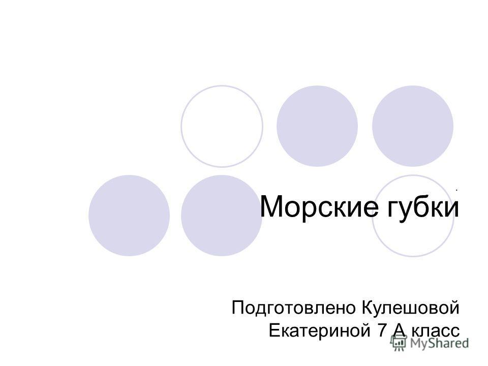 Морские губки Подготовлено Кулешовой Екатериной 7 А класс.