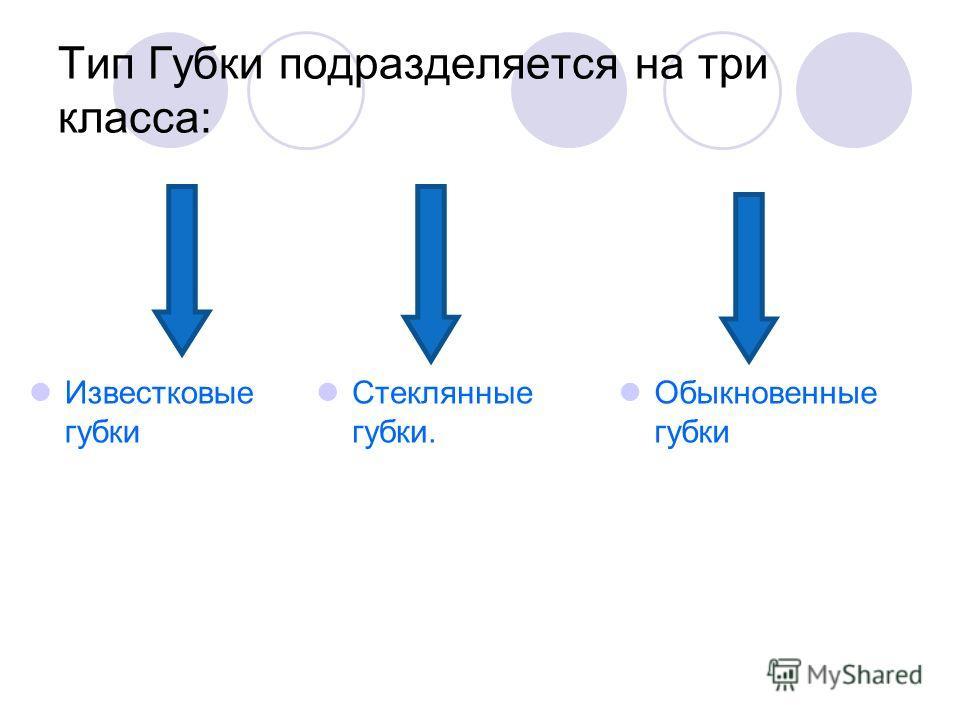 Тип Губки подразделяется на три класса: Известковые губки Обыкновенные губки Стеклянные губки.