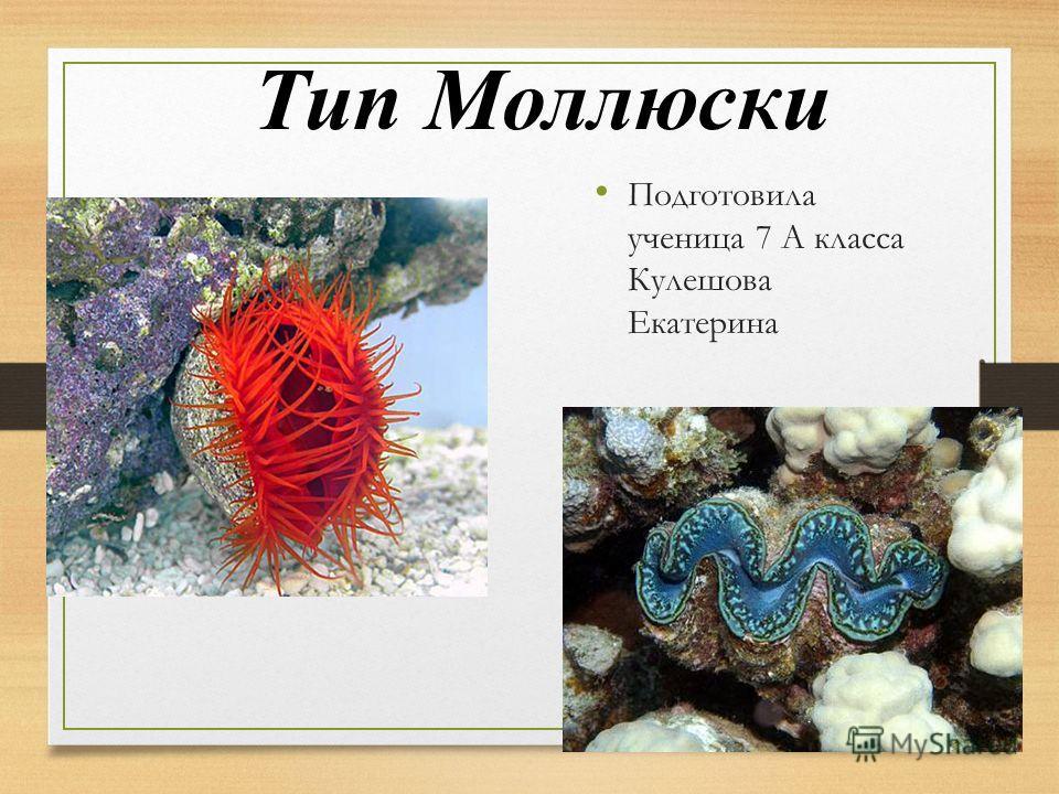 Тип Моллюски Подготовила ученица 7 А класса Кулешова Екатерина