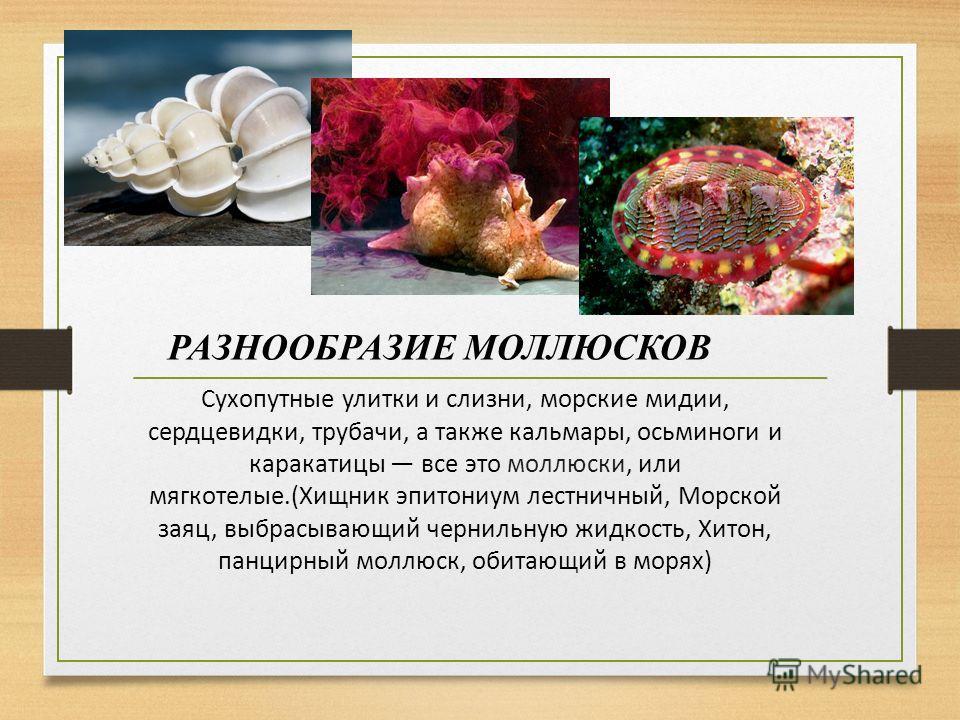 Сухопутные улитки и слизни, морские мидии, сердцевидки, трубачи, а также кальмары, осьминоги и каракатицы все это моллюски, или мягкотелые.(Хищник эпитониум лестничный, Морской заяц, выбрасывающий чернильную жидкость, Хитон, панцирный моллюск, обитаю